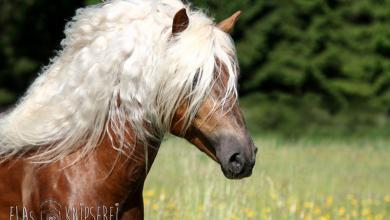 Süße Pferdebilder 390x220 - Süße Pferdebilder