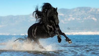 Schöne Bilder Von Pferden Kostenlos Herunterladen 390x220 - Schöne Bilder Von Pferden Kostenlos Herunterladen