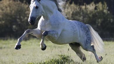 Schöne Pferde Bilder 390x220 - Schöne Pferde Bilder
