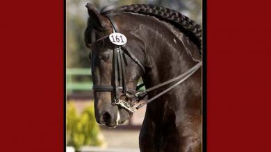 Schöne Pferde Bilder Für Facebook 390x220 - Schöne Pferde Bilder Für Facebook