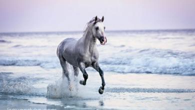 Schöne Pferde Bilder Für Whatsapp 390x220 - Schöne Pferde Bilder Für Whatsapp