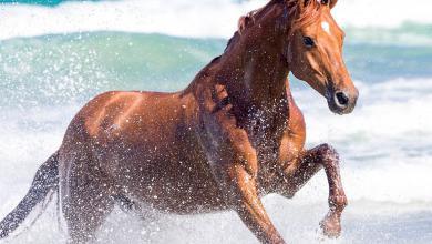 Schöne Pferde Bilder Kostenlos Herunterladen 390x220 - Schöne Pferde Bilder Kostenlos Herunterladen