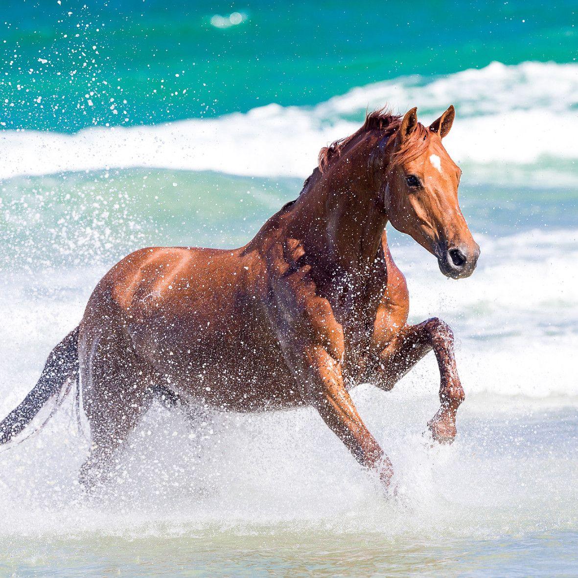 Schöne Pferde Bilder Kostenlos Herunterladen - Schöne Pferde Bilder Kostenlos Herunterladen