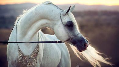 Schöne Pferde Fotos Für Facebook 390x220 - Schöne Pferde Fotos Für Facebook