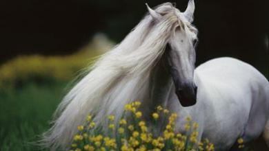 Schöne Pferde Fotos Für Whatsapp 390x220 - Schöne Pferde Fotos Für Whatsapp