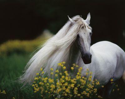 Schöne Pferde Fotos Für Whatsapp Bilder Und Sprüche Für
