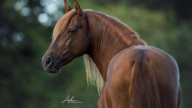Schöne Pferdebilder Für Facebook 390x220 - Schöne Pferdebilder Für Facebook
