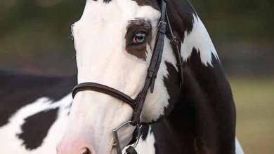 Schöne Pferdebilder Für Whatsapp 390x220 - Schöne Pferdebilder Für Whatsapp