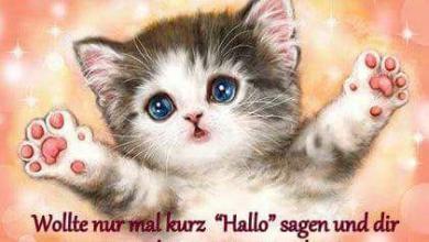 Schönen Tag Sprüche Für Whatsapp 390x220 - Schönen Tag Sprüche Für Whatsapp