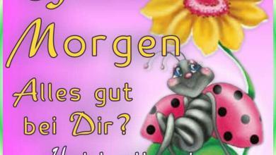 Schönen Tag Sprüche Facebook 390x220 - Schönen Tag Sprüche Facebook