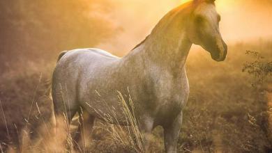 Schleich Pferde Fotos 390x220 - Schleich Pferde Fotos