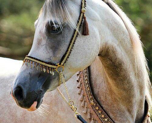 schleich pferde fotos für whatsapp  bilder und sprüche