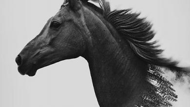 Schleich Pferde Kostenlos Downloaden 390x220 - Schleich Pferde Kostenlos Downloaden