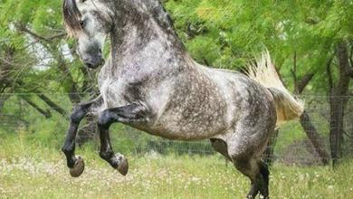 Schwarzes Pferd Für Whatsapp 390x220 - Schwarzes Pferd Für Whatsapp