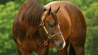 Spanier Pferde Kaufen 390x220 - Spanier Pferde Kaufen