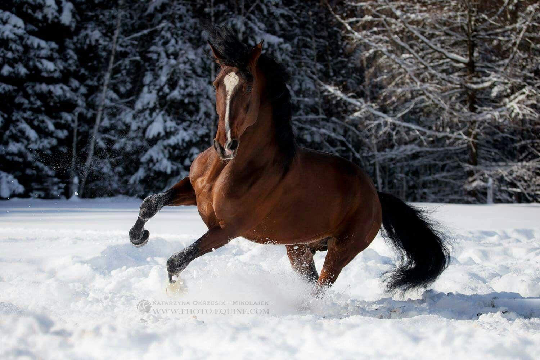 Spanier Pferde Kaufen Für Whatsapp - Spanier Pferde Kaufen Für Whatsapp