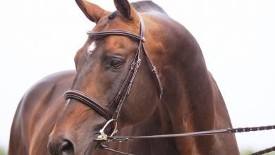 Spanische Pferde Kaufen 390x220 - Spanische Pferde Kaufen