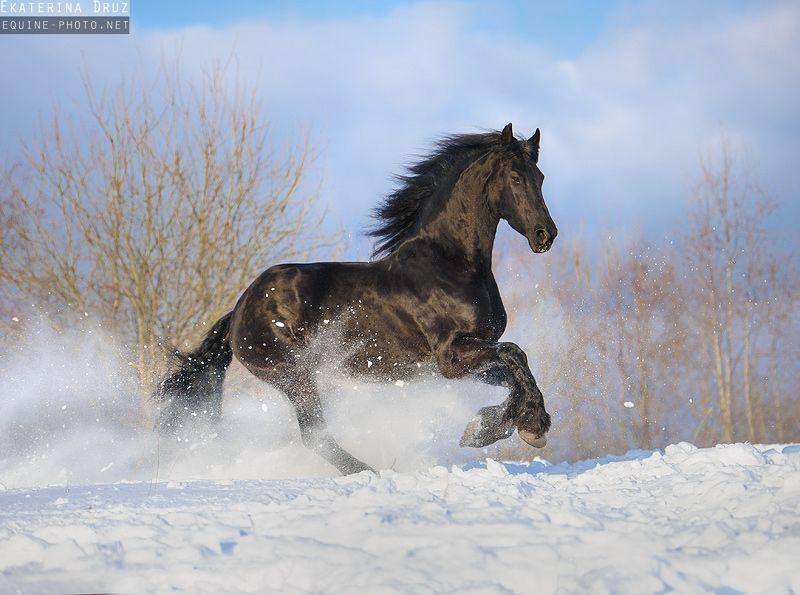 Spanische Pferde Verkauf Kostenlos Herunterladen - Spanische Pferde Verkauf Kostenlos Herunterladen
