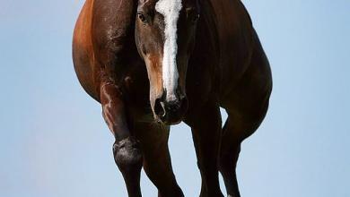 Starke Pferde 390x220 - Starke Pferde