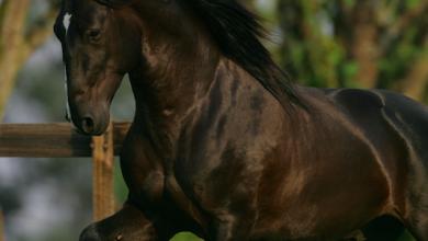 Starke Pferde Kostenlos Herunterladen 390x220 - Starke Pferde Kostenlos Herunterladen