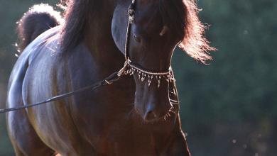 Suche Bilder Von Pferden Kostenlos Herunterladen 390x220 - Suche Bilder Von Pferden Kostenlos Herunterladen