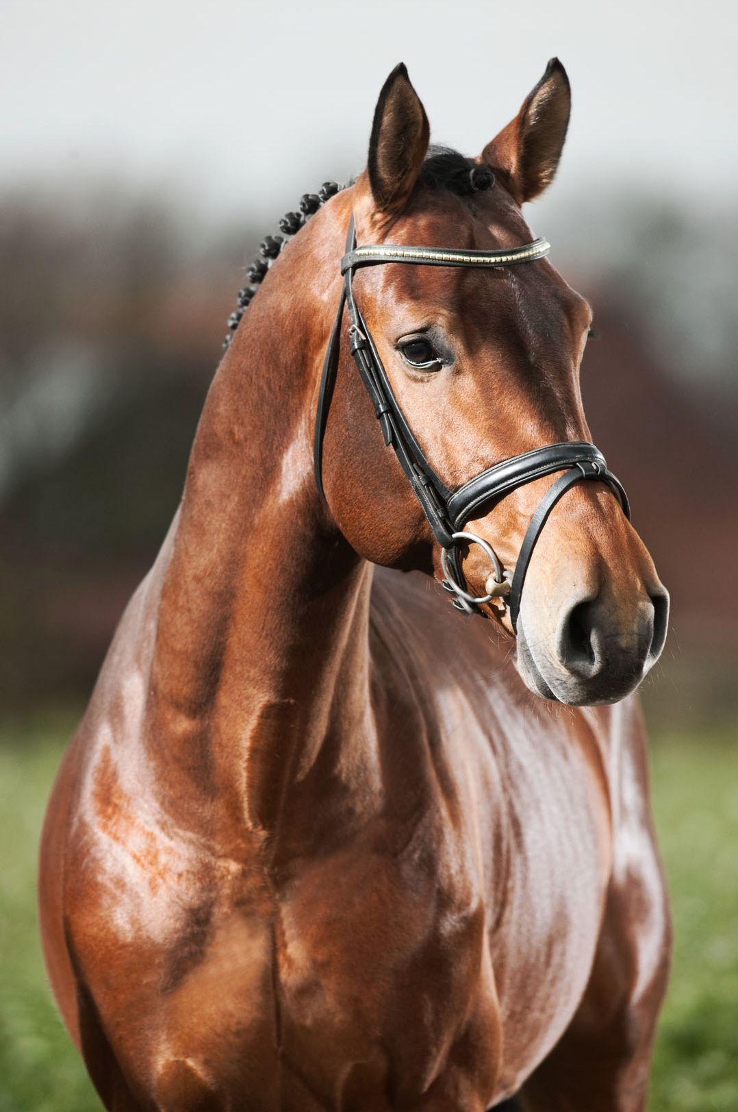 Suche Pferd Kostenlos Herunterladen - Suche Pferd Kostenlos Herunterladen