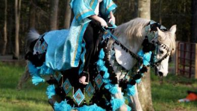Tierbilder Pferde Kostenlos Downloaden 390x220 - Tierbilder Pferde Kostenlos Downloaden