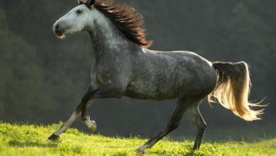 Tiere Pferde 390x220 - Tiere Pferde