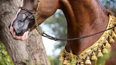 Tinker Pferd Kostenlos Downloaden 390x220 - Tinker Pferd Kostenlos Downloaden