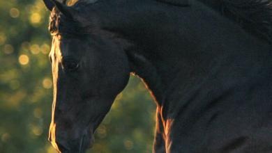 Tolle Pferdebilder 390x220 - Tolle Pferdebilder