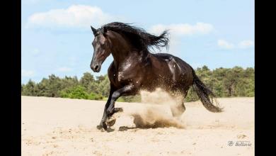 Ungarn Pferd Kaufen Für Facebook 390x220 - Ungarn Pferd Kaufen Für Facebook