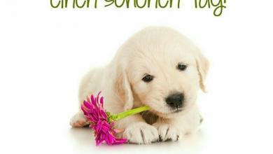 Wünsche Allen Einen Schönen Tag 390x220 - Wünsche Allen Einen Schönen Tag