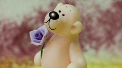 Wünsche Für Einen Schönen Tag 390x220 - Wünsche Für Einen Schönen Tag