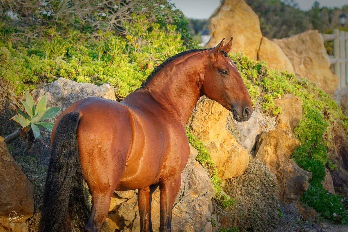 Wandbild Pferd Für Facebook - Wandbild Pferd Für Facebook