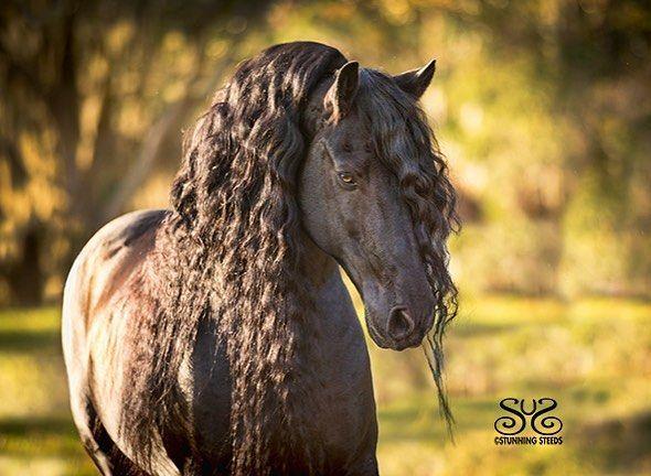 Wandbild Pferd Für Whatsapp - Wandbild Pferd Für Whatsapp