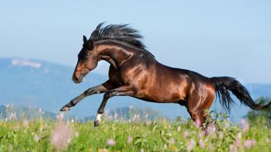 Warendorf Pferde Kaufen 390x220 - Warendorf Pferde Kaufen