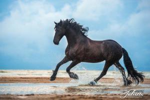 Warendorf Pferde Kaufen Für Facebook 300x200 - Warendorf Pferde Kaufen Für Facebook