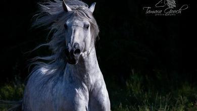 Warendorf Pferde Kaufen Kostenlos Herunterladen 390x220 - Warendorf Pferde Kaufen Kostenlos Herunterladen