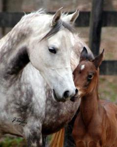Weiße Pferde Kaufen Für Whatsapp 239x300 - Weiße Pferde Kaufen Für Whatsapp
