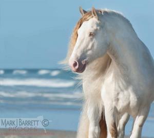 Weiße Pferde Kaufen Kostenlos Herunterladen 300x269 - Weiße Pferde Kaufen Kostenlos Herunterladen