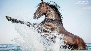 Weihnachten Pferde Bilder Für Whatsapp 390x220 - Weihnachten Pferde Bilder Für Whatsapp