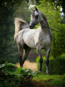 Weihnachtsbilder Mit Pferd Für Facebook 225x300 - Weihnachtsbilder Mit Pferd Für Facebook