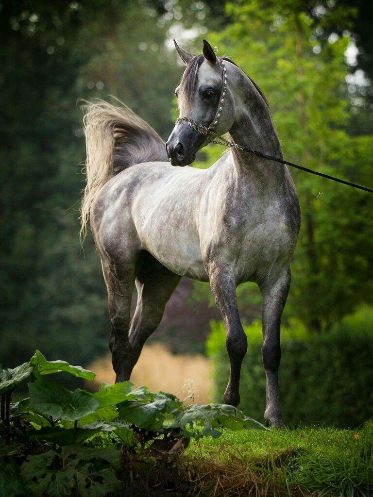 Weihnachtsbilder Mit Pferd Für Facebook Bilder Und Sprüche