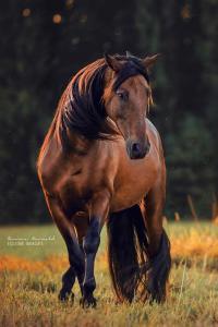 Weihnachtsbilder Pferd Für Facebook 200x300 - Weihnachtsbilder Pferd Für Facebook
