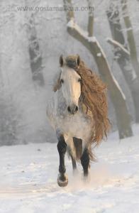Westfalen Pferde 196x300 - Westfalen Pferde