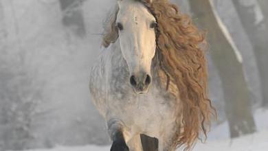 Westfalen Pferde 390x220 - Westfalen Pferde