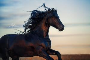 Wilde Pferde Bilder Für Facebook 300x200 - Wilde Pferde Bilder Für Facebook
