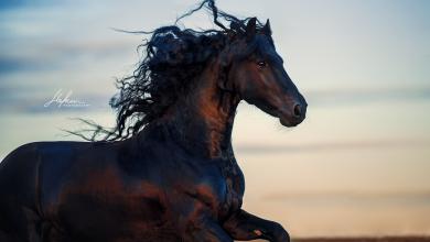 Wilde Pferde Bilder Für Facebook 390x220 - Wilde Pferde Bilder Für Facebook