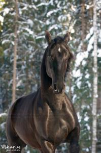 Witzige Pferde Bilder Kostenlos Herunterladen 199x300 - Witzige Pferde Bilder Kostenlos Herunterladen