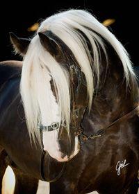 Wunderschöne Pferde Bilder Für Facebook - Wunderschöne Pferde Bilder Für Facebook